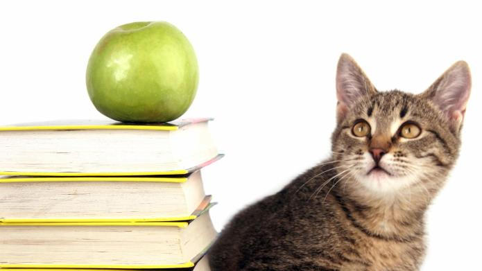 Feral cat gives Maryland elementary students