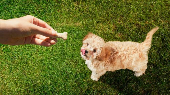 Simple Homemade Dog Treats You Can