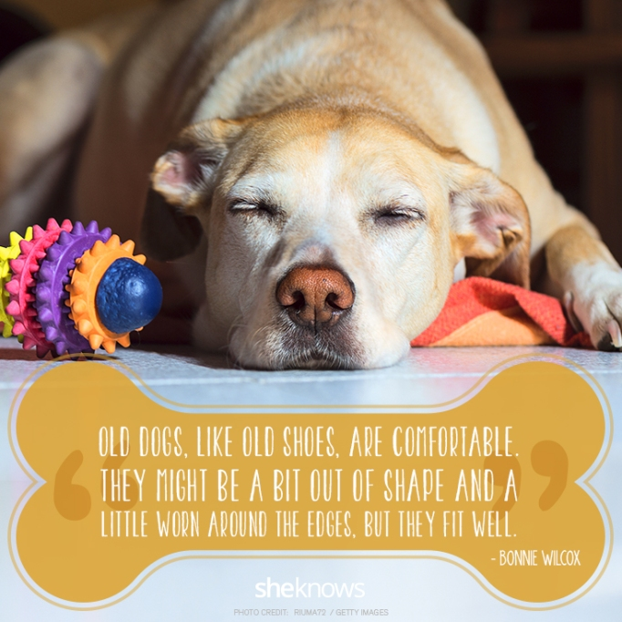 """""""Old dogs, like old shoes, are comfortable. They might be a bit out of shape and a little worn around the edges, but they fit well."""" —Bonnie Wilcox"""