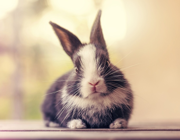 Baby bunny day 27