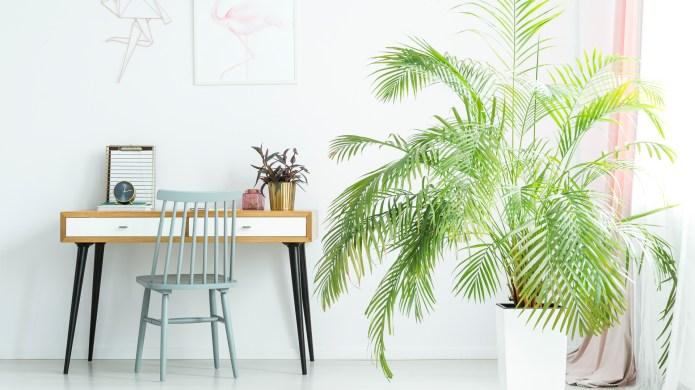 11 Big, Leafy Plants That'll Bring
