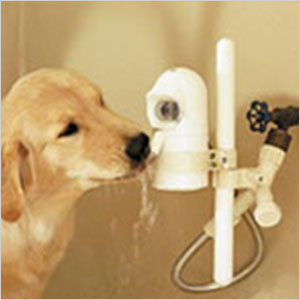WaterDog pet fountain | Sheknows.ca