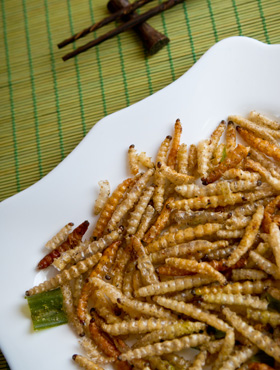 Fried larvae