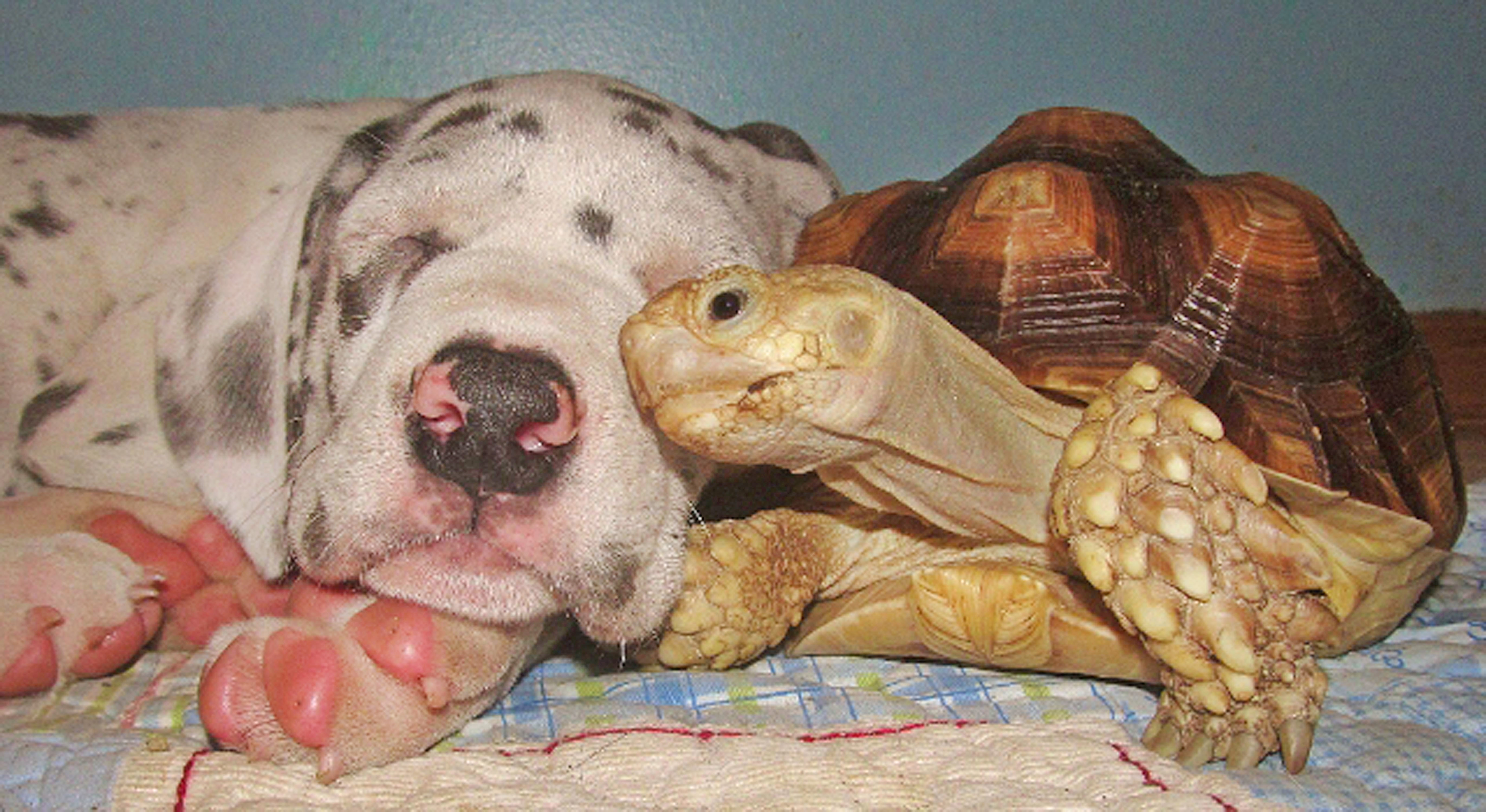 og and a turtle