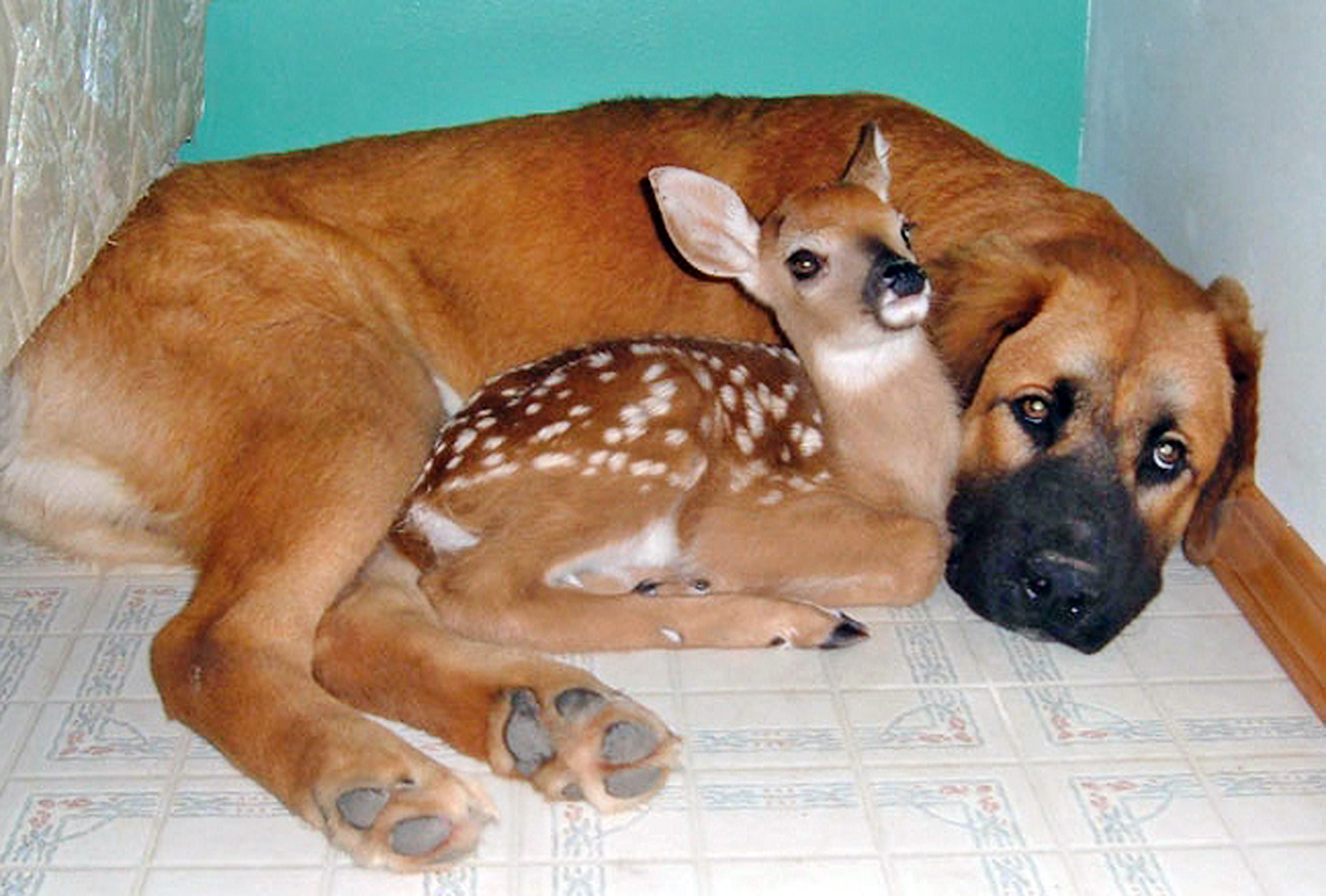 dog and deer doe
