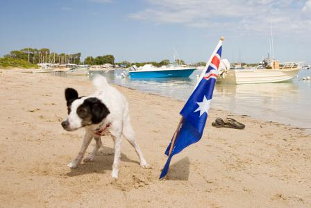 Dog-friendly events around Australia
