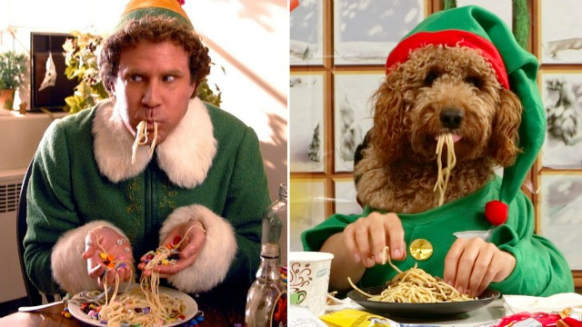 Will Ferrell and Samson the Doodle in Elf