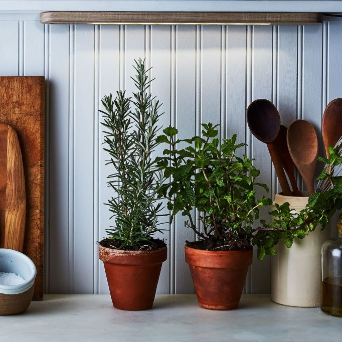 Valentine's Day Gifts For Moms: Herb growbar at home herb garden from Food52