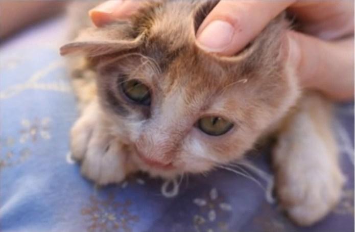 Sick cat on death's door saved