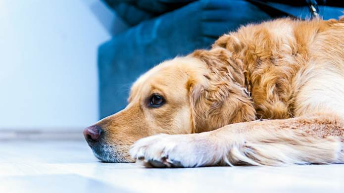 Do Dogs Experience Grief the Same