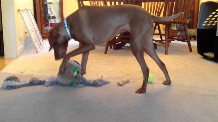 13 Dogs that really hate cleaning