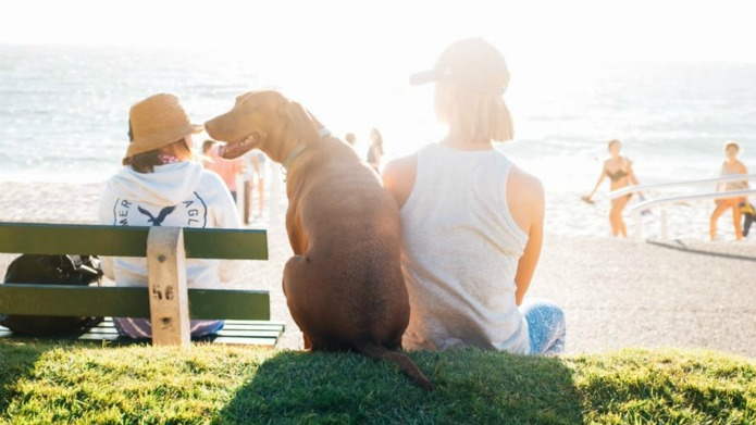Dogs may play a key role