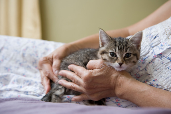 Woman and Kitten in Bed
