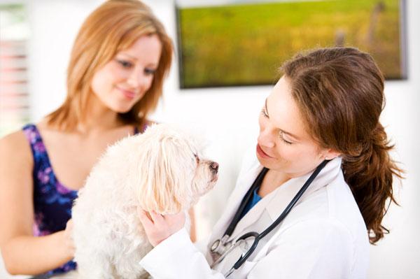 small breed dog at vet