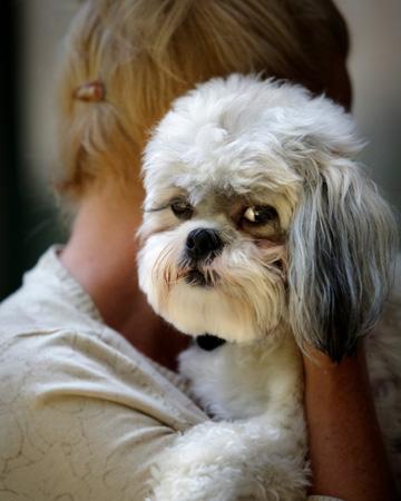 Woman holding sad dog