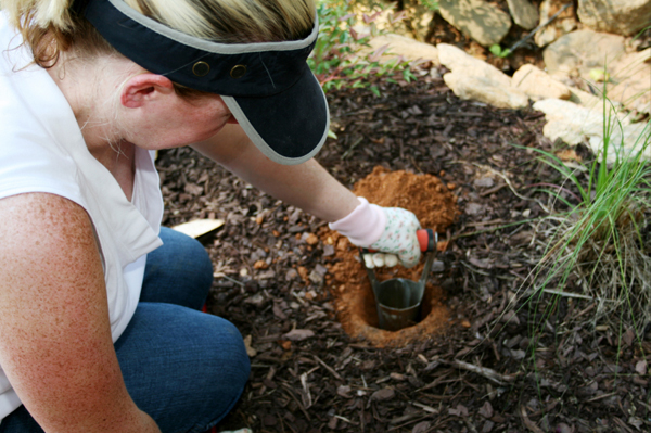 Woman planting bulbs