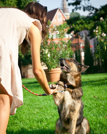 Woman shaking dogs hand