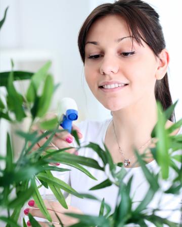 Woman spraying houseplant