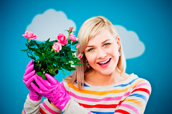 Spring rose care