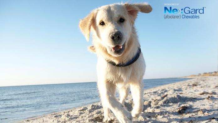 Dog breeds that love the beach