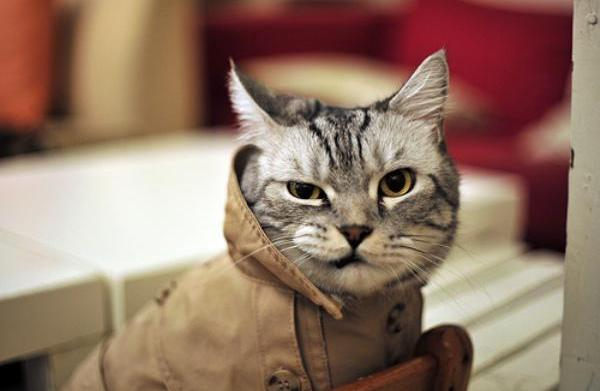12 Purr-fect reasons to dress up