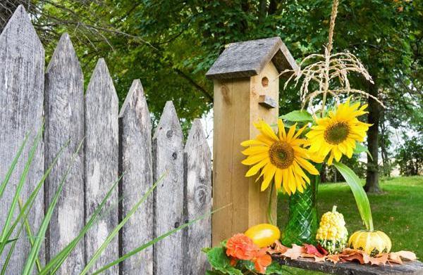 Growing a fall garden