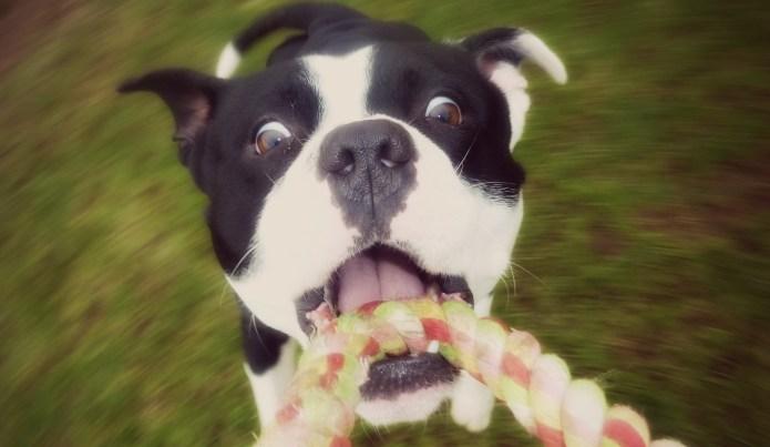 Funny dog videos that will brighten