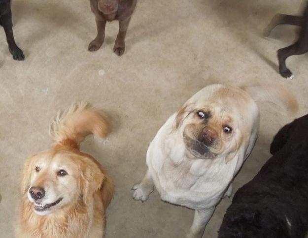 WTF dog