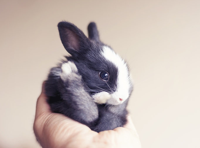 Baby bunny day 18