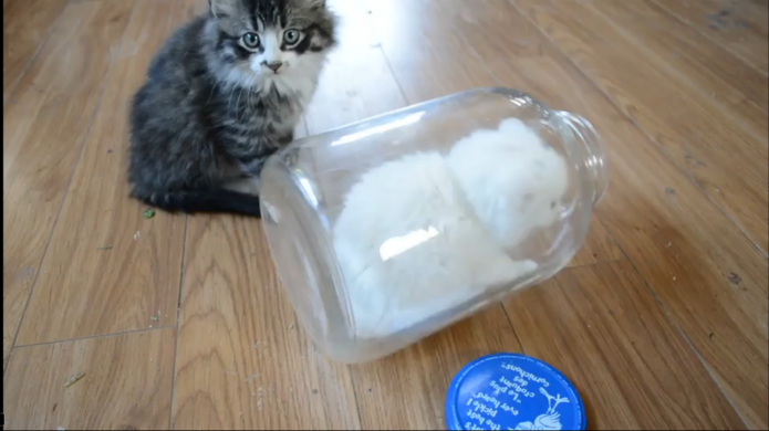 This little white kitten discovers just