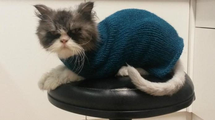 This cat hates his sweater, but