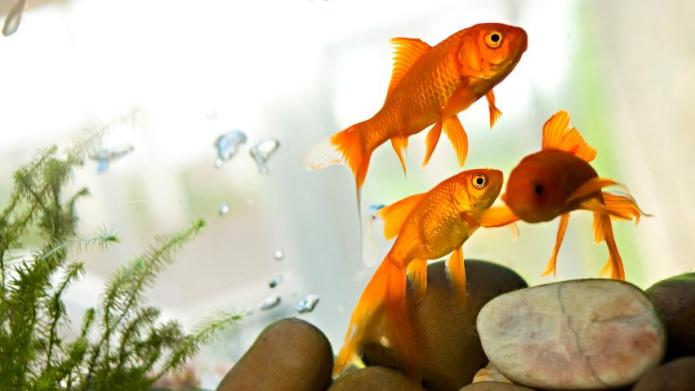 Why you need an aquarium filter
