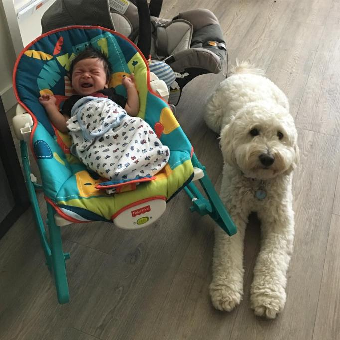 Crying baby with dog