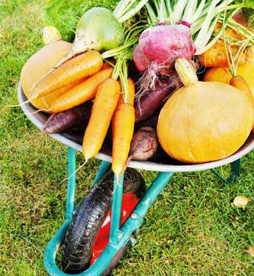Fall fruits and veggies that fight