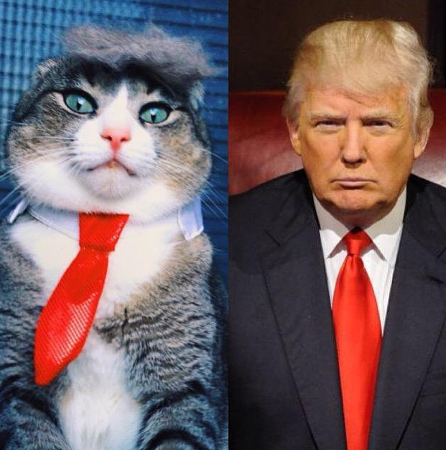 Cat-impersonator