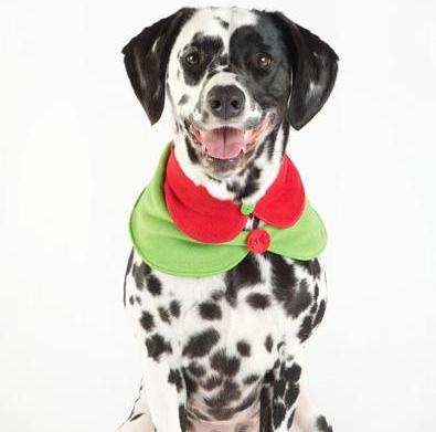 Top 10 gifts for your canine