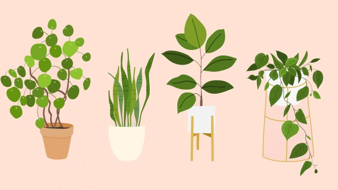 The Best Houseplants That Basically Anyone