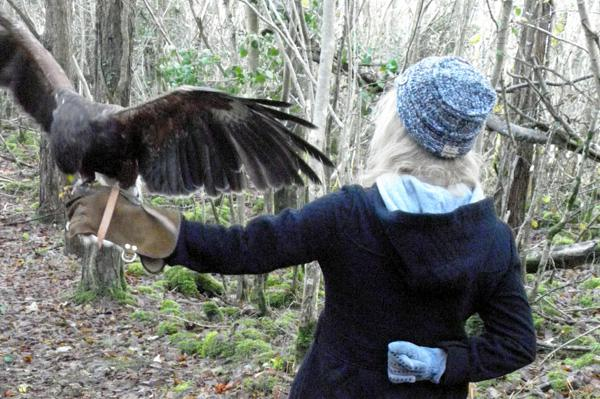 Travel Ireland and take a hawk