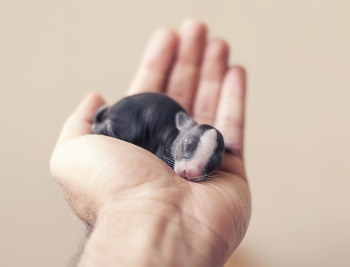 Baby Bunny Day 7