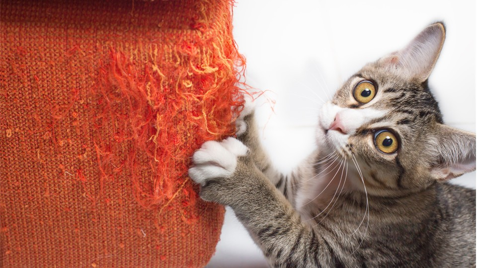 6 Tips for Saving Your Furniture, Your Cat's Claws & Everyone's Sanity –  SheKnows