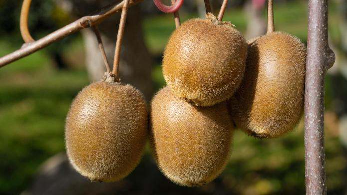 How to turn store-bought kiwi into