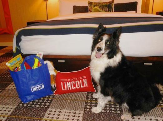 5 Posh hotels for pups
