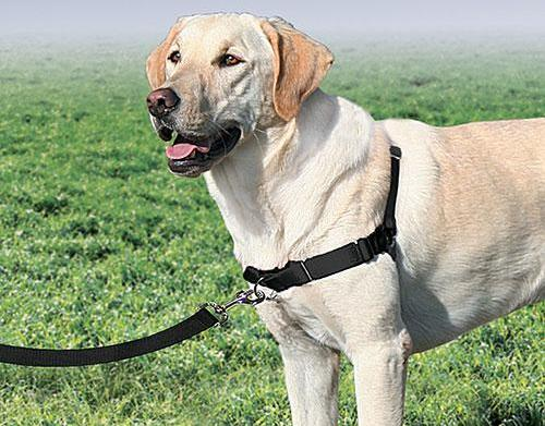 Which harness is right for your