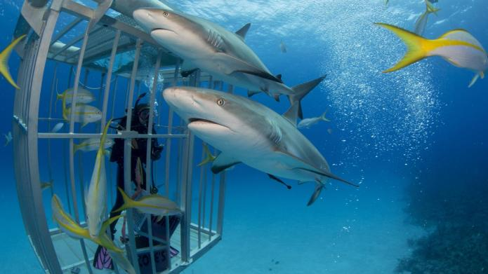 Shark photobombs that you won't believe