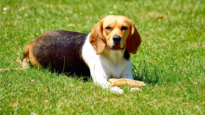 10 Small Dog Breeds That Aren't