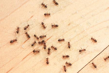 How to deal with home pests