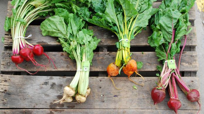 23 Tasty beet recipes that will