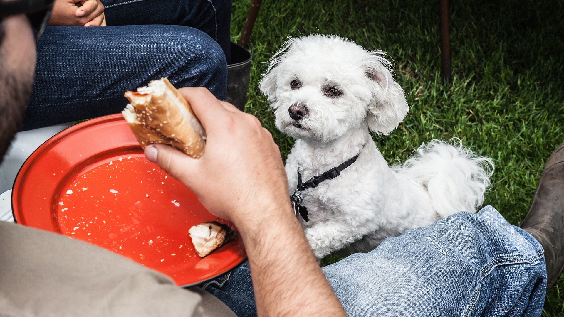 The Human Foods That Are Safe For Dogs