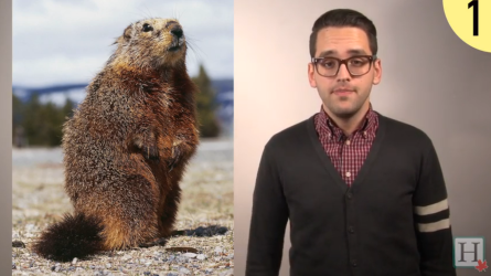 Why Groundhog Day doesn't matter in