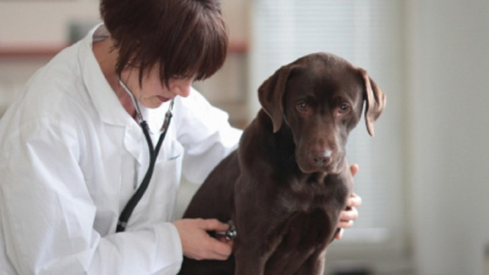 Female veterinarian listening to dogs chest